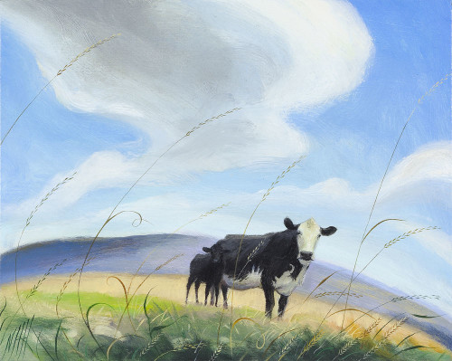 Cow, calf and the Racing Clouds
