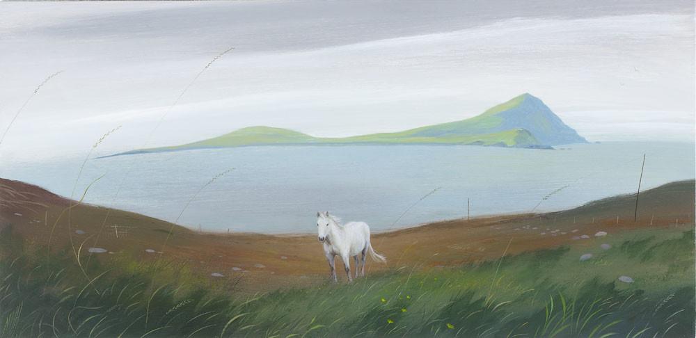 Pony near Clare Island