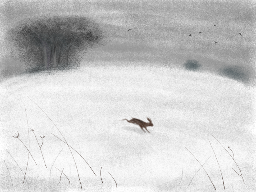 Hare in the Snow